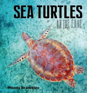 Sea Turtles on the Edge - Wild Dog Books