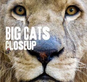 Big Cats Close Up