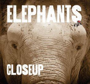 Elephants Up Close - Wild Dog Books