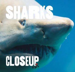 Sharks Close Up - Wild Dog Books