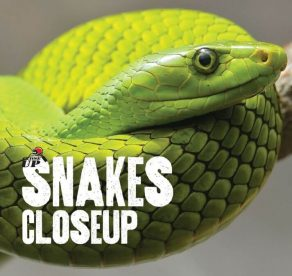 Snakes Close Up - Wild Dog Books