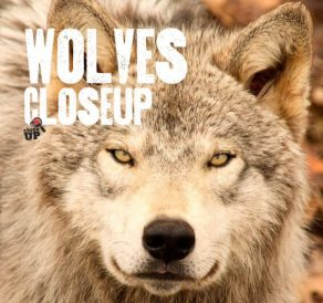 Wolves Close Up - Wild Dog Books