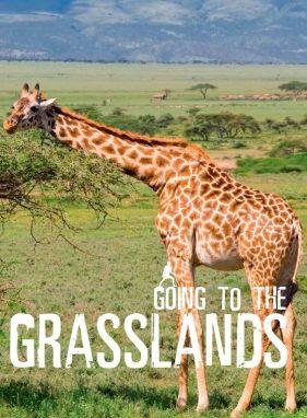 Going To The Grasslands - Wild Dog Books