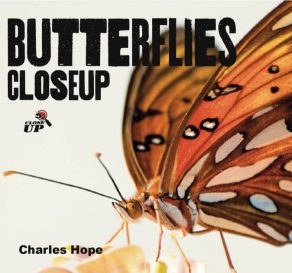Butterflies Close Up - Wild Dog Books