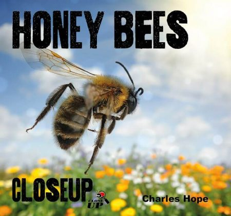 Honey Bees Close Up - Wild Dog Books