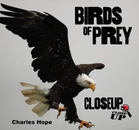 Birds of Prey Close Up - Wild Dog Books