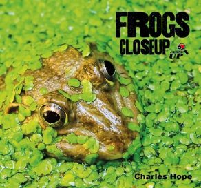 Frogs Close Up - Wild Dog Books